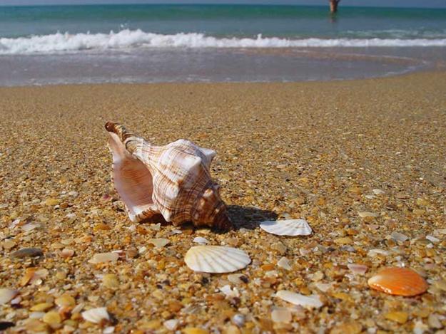 Тур в Одессу пикничок на пляже